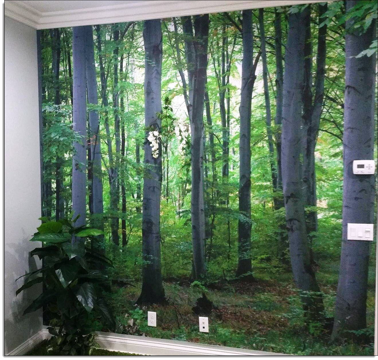 Woodland forest peel and stick wall mural wall murals gives you an expansive view thatll make you feel as though youve traveled miles and found the serenity of the great outdoors amipublicfo Choice Image