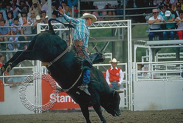 Bull Riding Mural 258-75011M