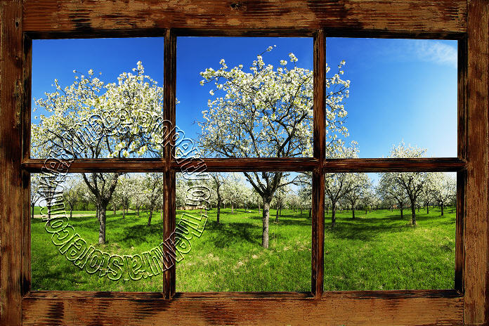 Orchard Window (Rustic) 1-piece Peel & Stick Canvas Wall Mural