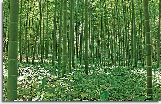 Bamboo forest mural umb91133 for Bamboo forest wall mural