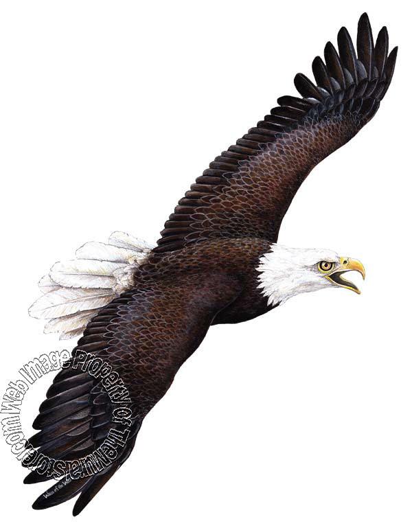 Eagle Peel & Stick Applique 50107