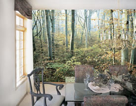 Morning Forest Mural C807