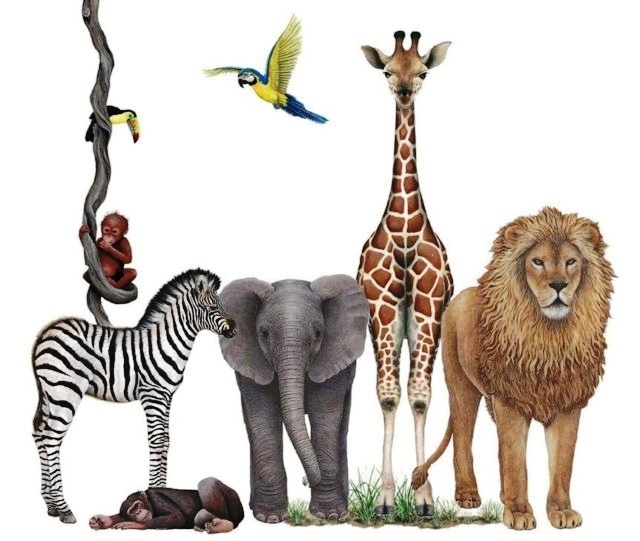 Jungle Wildlife Collection #1