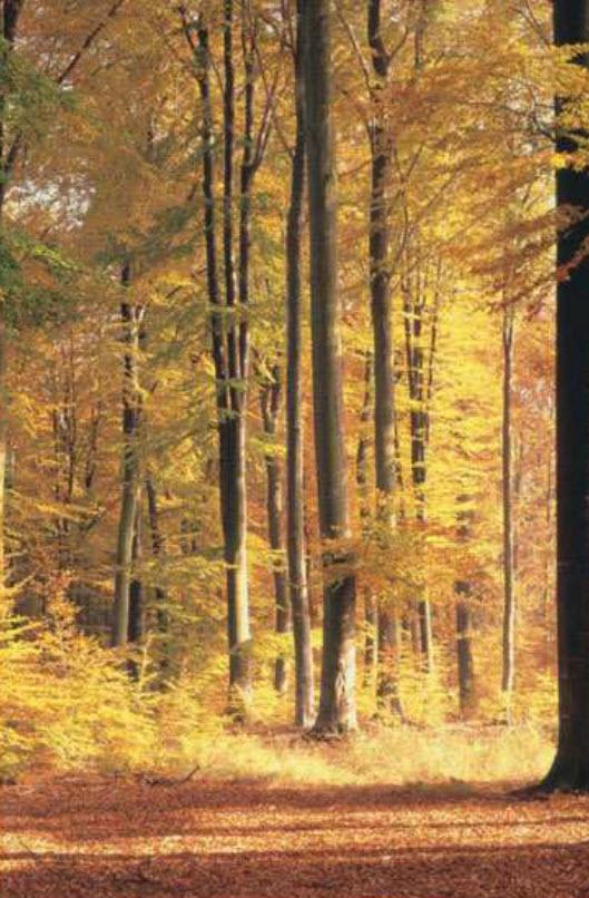 Golden Forest 4041