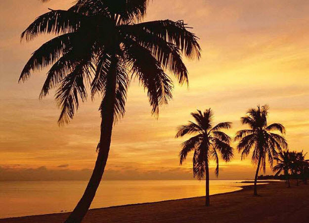 Island Sunset DS8023
