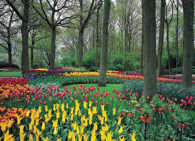 Charmant Tulip Garden Wall Mural DS8042