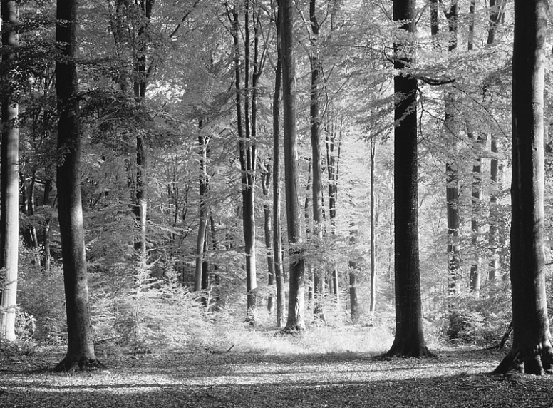 Grand Forest Black and White