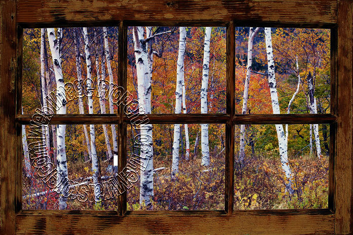 Birch Forest Window One Piece Peel U0026 Stick Canvas Wall Mural