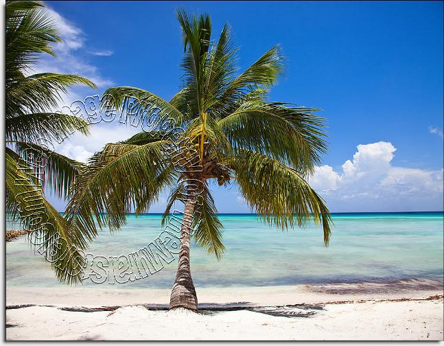 Tropical Beach Peel U0026 Stick Canvas Wall Mural Part 17