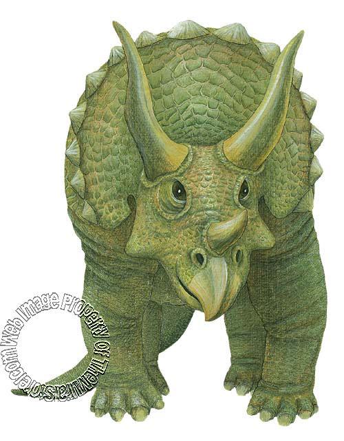 Triceratops Peel & Stick Applique #2