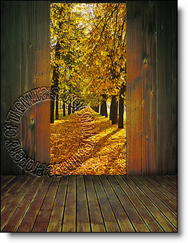 Wooded Path Peel Amp Stick 1 Piece Door Wall Mural