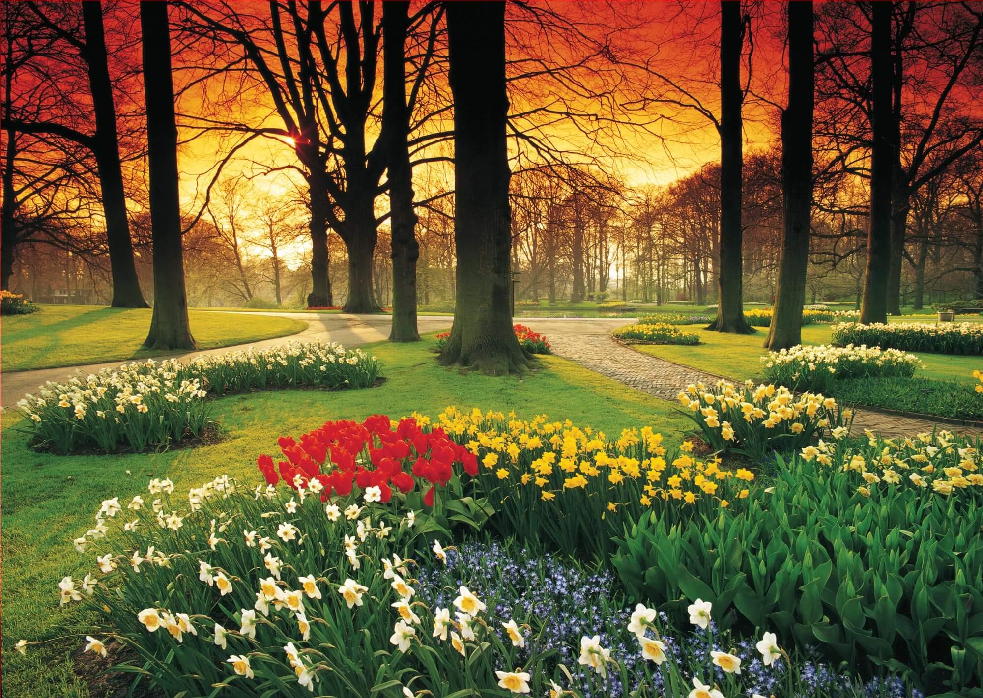 Floral Sunset PR1857 Wall Mural