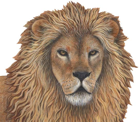 Lion Peel & Stick Applique 110915