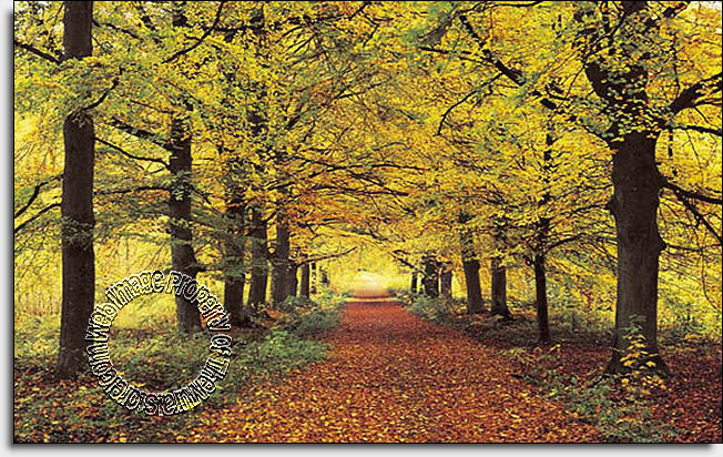 The Mural Store > Full Size Large Wall Murals > Forest Path 274 Wall ...