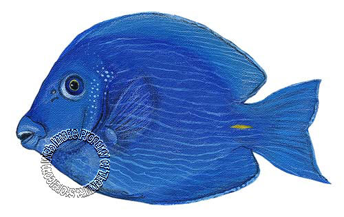 Blue Tang Peel & Stick Applique 21127
