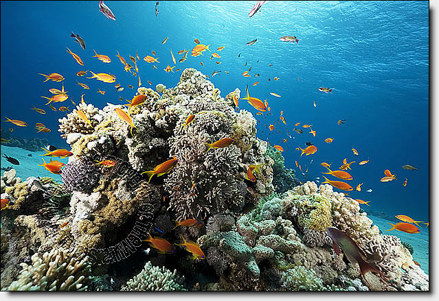 Coral Reef One-piece Peel & Stick Canvas Wall Mural