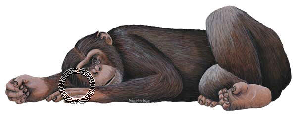 Chimpanzee Peel & Stick Applique 30809