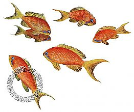 Goldfish Fish Peel & Stick Applique 71530