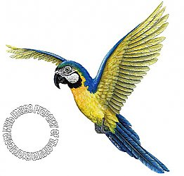 Macaw Peel & Stick Applique 130103