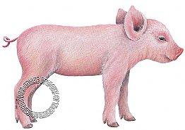 Pig 1 Peel & Stick Applique 160907