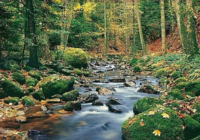 Forest Stream DM278 Wall Mural