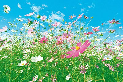 Flower Meadow Mural 281 DM281 by Ideal Decor