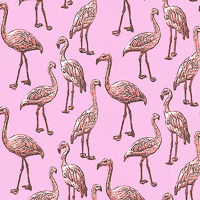 Flamingo Pink Graphic Wallpaper