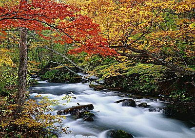 Autumn Brook Wall Mural