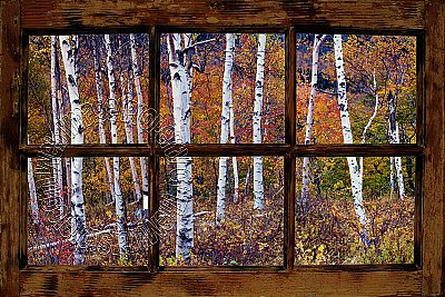 Birch Forest Window One-piece Peel and Stick Canvas Wall Mural