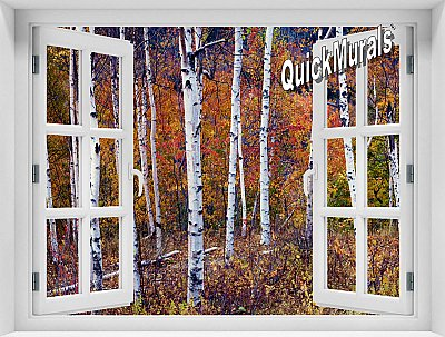 Autumn Birches Window Mural