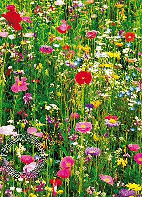 Flower Field Mural 375 Hot Deal