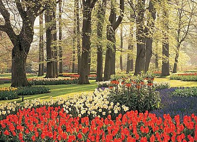 Floral Tulips and Trees Wall Mural