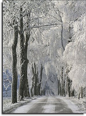 SNOWY ROAD Paste the Wall Mural by Brewster 99087