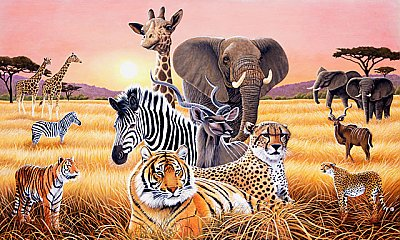 Safari 2 Wall Mural C871