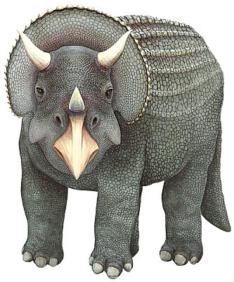 Triceratops Grey