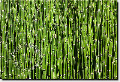 Bamboo Backround Peel & Stick Canvas Wall Mural