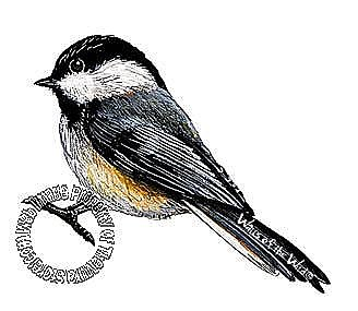 Chickadee Peel & Stick Applique 30805