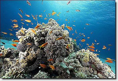 Coral Reef Peel & Stick Canvas Wall Mural by QuickMurals