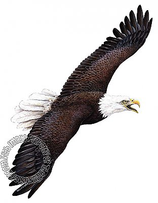 Eagle Peel & Stick Applique 50107