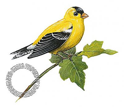 Goldfinch Peel & Stick Applique 71512