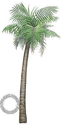 Palm Tree Peel & Stick Applique 160110