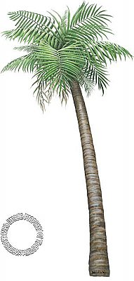 Palm Tree Small Peel & Stick Applique 160111
