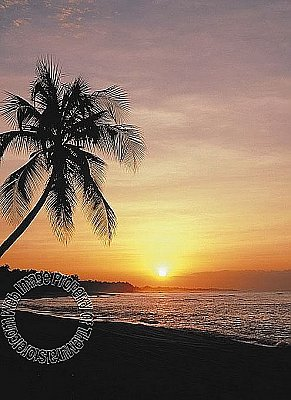 Tropical Sunset Mural PR1028 4028