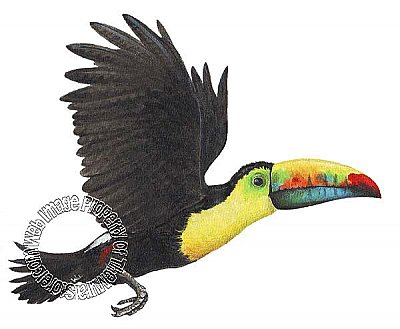 Toucan Peel & Stick Applique 201100