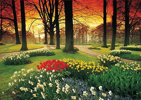 Floral Sunset Mural 1857 DS8057