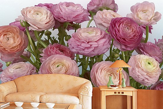 Buttercaps Blooms Roses Wall Mural DS8056 Roomsetting