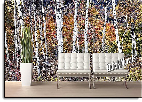 Birch Forest Peel and Stick Wall Mural roomsetting