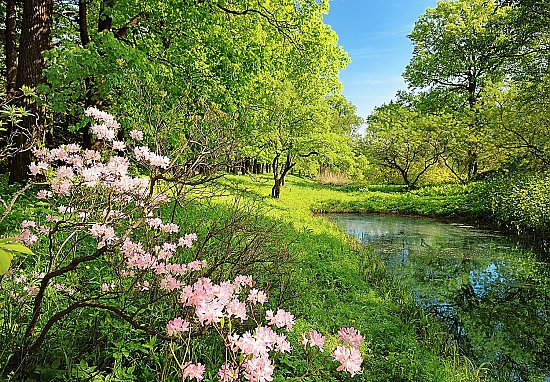 Park In The Spring Wall Mural Dm136 Full Size Large Wall Murals The Mural Store