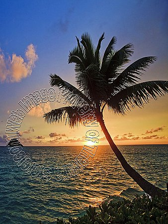 Tropic Sundown Peel & Stick Canvas Wall Mural