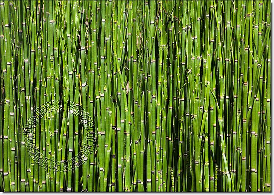 Bamboo Backround Peel and Stick Wall Mural